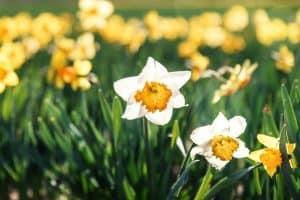 En daar is de lente!!!